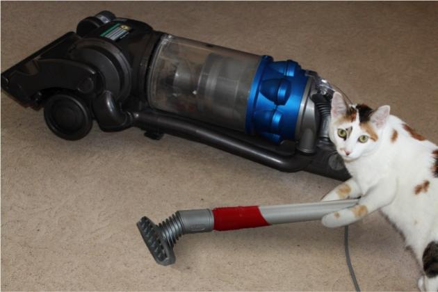 vacuum-cat